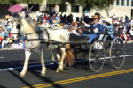 One Horse Buggie and Carriage Rentals Tucson Arizona