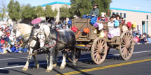 Feb26th2015_TucsonRodeoParade